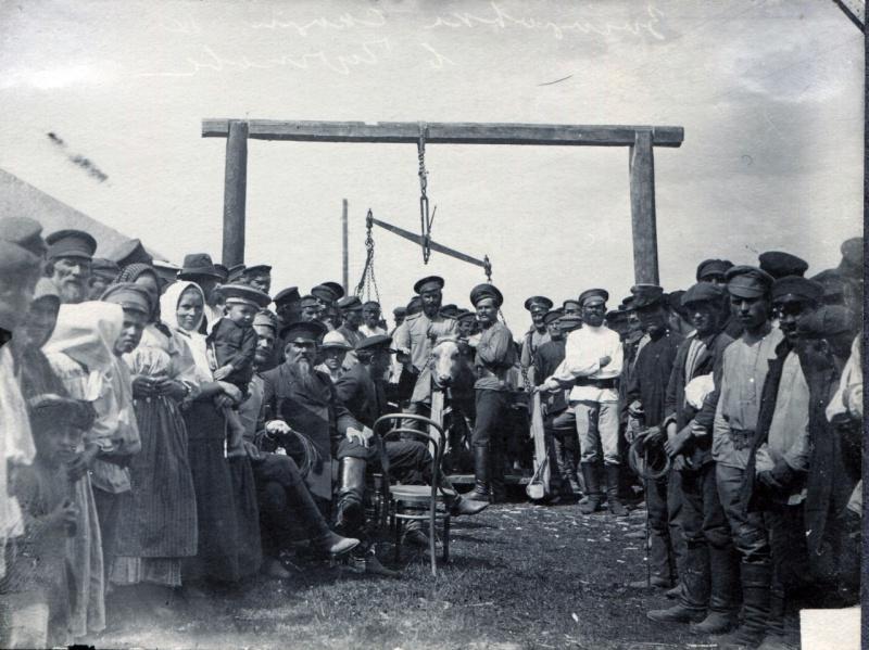 Закупка скота для армии, 1916 г.